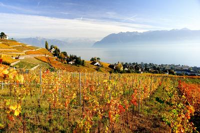 Vignoble en terrasses automne, Lavaux_Urs Achermann