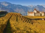 Nel regno del vino tra feste, vendemmia e musei