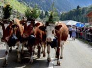 Pascoli alpini in festa a Etivaz