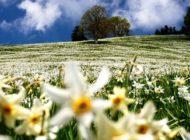 Sentieri tra i Narcisi a Montreux, nella neve di maggio