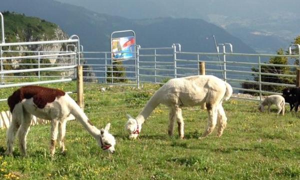 Kuklos animal park