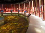 Il Museo Olimpico di Losanna, un tempio per lo sport