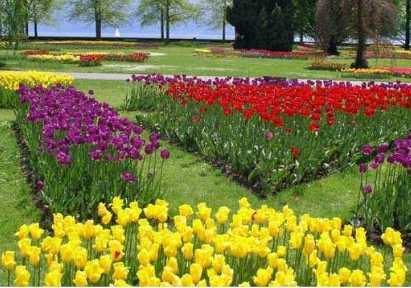 Festa dei Tulipani morges